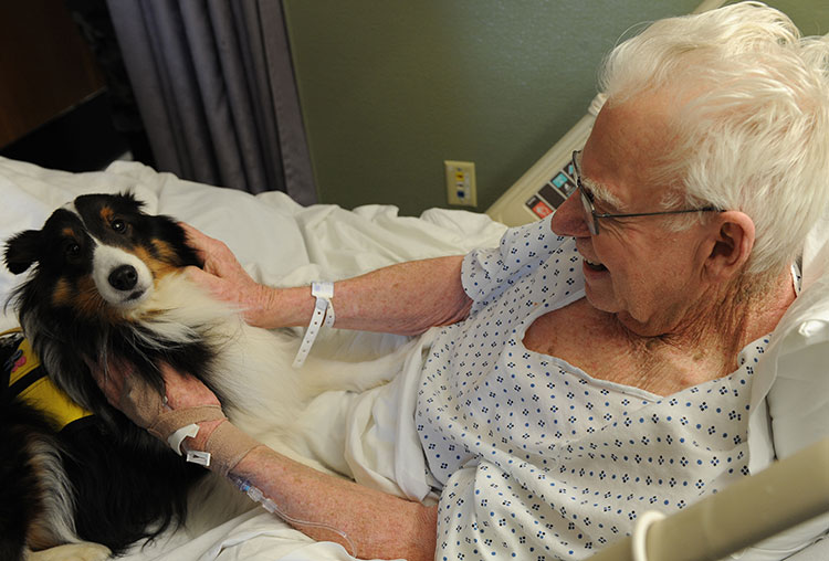 therapy dog volunteer